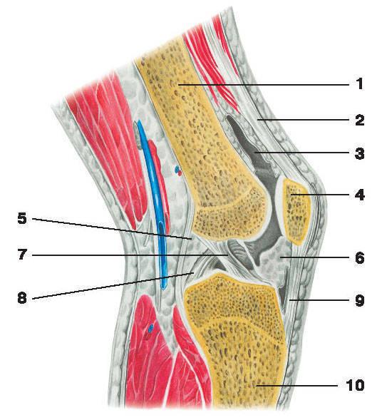 В колене(вернее в Коленном суставе)нет как таковых мягких тканей,увы.