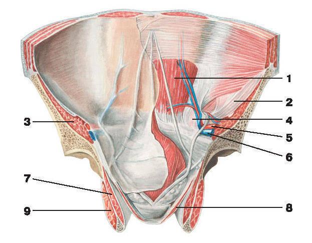 суставы при рассеянном склерозе Межреберная невралгия: причины, симптомы, лечение.