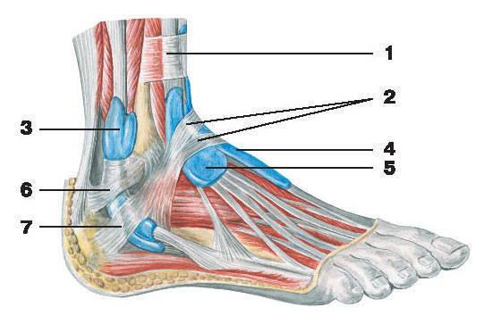эхогенный артроз плечевого сустава теносивит