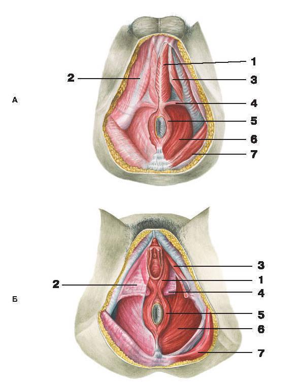 Энциклопедия женского тела