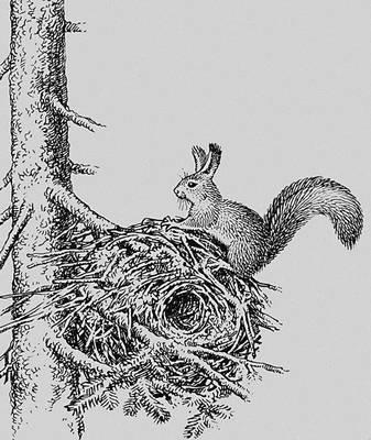"""Иллюстрация к статье на тему  """"Гнёзда """".  Статьи для написания"""