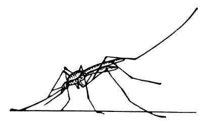 Рис. 1. Сидящий малярийный комар.  Комары. человека с учением о...