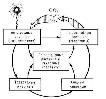 Доклад по биологии на тему круговорот