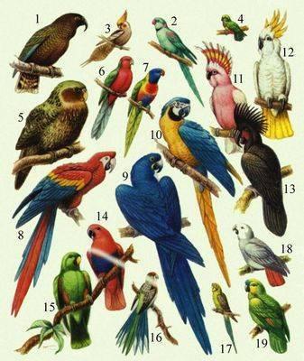 ...или зачем в природе столько видов насекомых, я уже не говорю про растения и животных - миллионы видов.