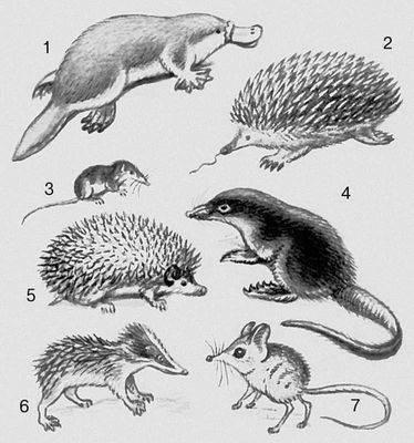 """Значение слова  """"Млекопитающие """" в Большой Советской Энциклопедии."""