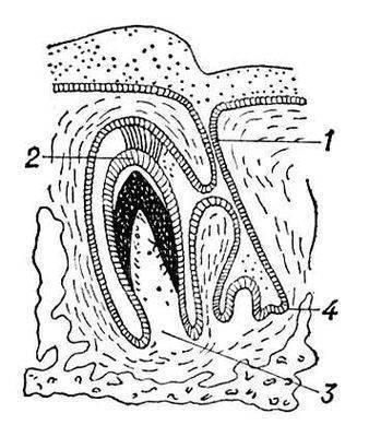 Оптические свойства эмали и дентина зубов человека обусловлены.  Просмотров.  Реферат Медицина Подбор цвета в...