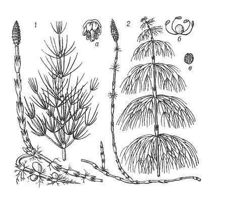 Сорняки многолетних кормовых трав