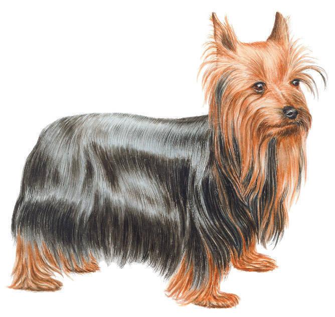 Куртка для собаки своими руками выкройка