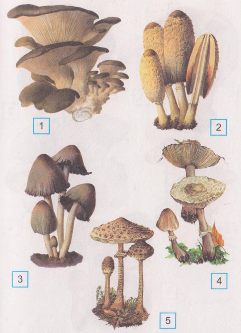 Русский гриб